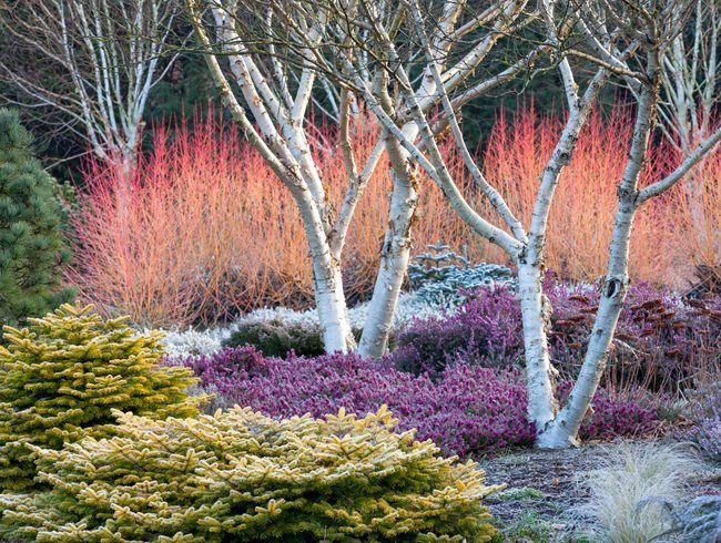 Bressingham Gardens' design pop with color in winter.