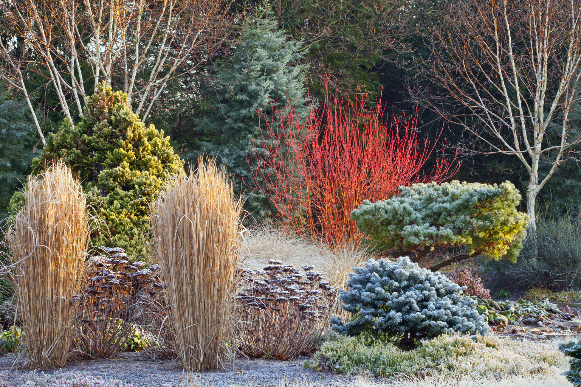 HOW TO DESIGN YOUR GARDEN FOR WINTER INTEREST