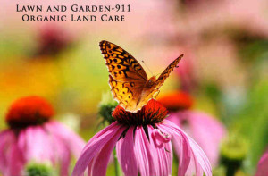 Home garden at Easton's Garden-911 specializes in native plants that support pollinators.