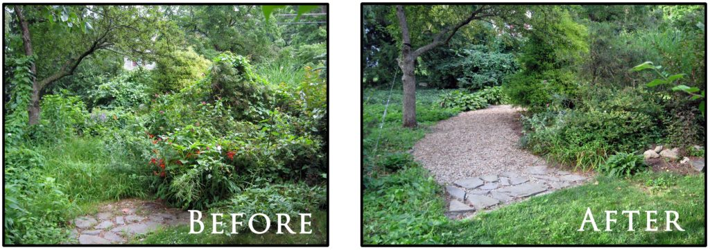 Before and after photos of landscape maintenance